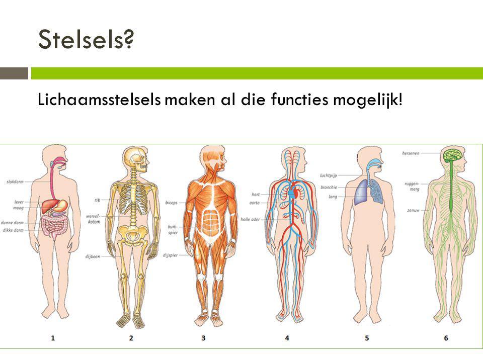 Stelsels? Lichaamsstelsels maken al die functies mogelijk!