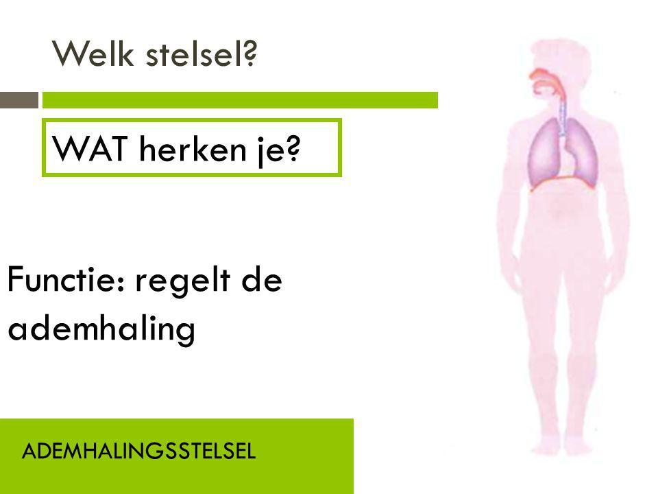 Welk stelsel? ADEMHALINGSSTELSEL Functie: regelt de ademhaling WAT herken je?
