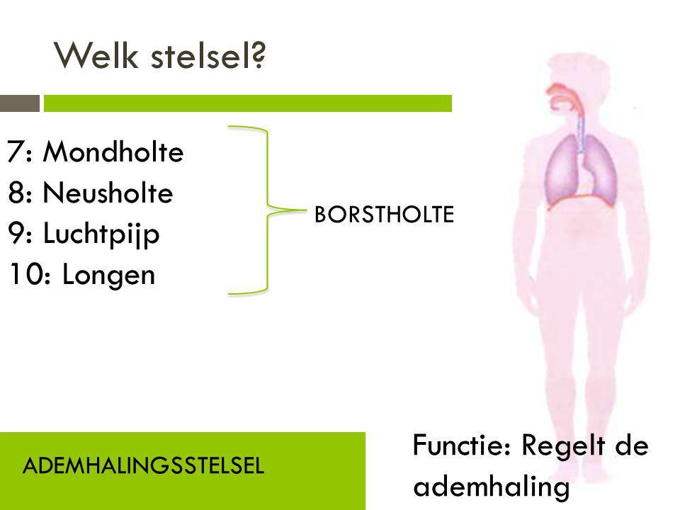 Welk stelsel? ADEMHALINGSSTELSEL Functie: Regelt de ademhaling 7: Mondholte 8: Neusholte 9: Luchtpijp 10: Longen BORSTHOLTE