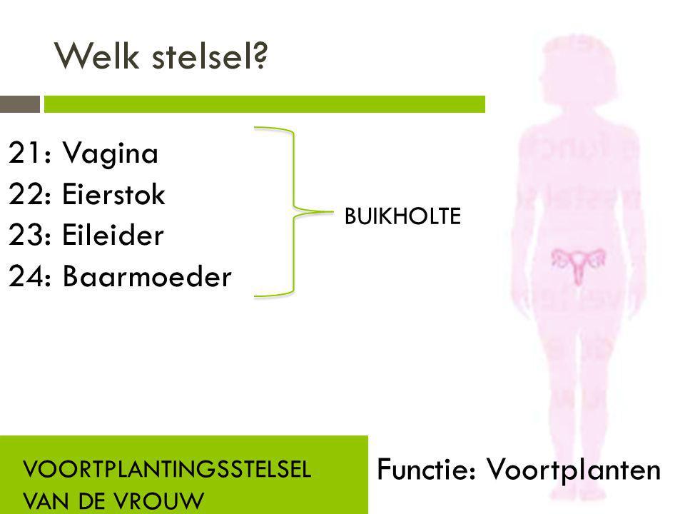 Welk stelsel? VOORTPLANTINGSSTELSEL VAN DE VROUW Functie: Voortplanten 21: Vagina 22: Eierstok 23: Eileider 24: Baarmoeder BUIKHOLTE
