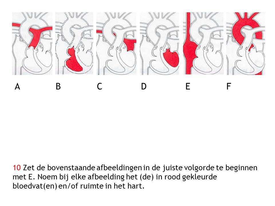 10 Zet de bovenstaande afbeeldingen in de juiste volgorde te beginnen met E. Noem bij elke afbeelding het (de) in rood gekleurde bloedvat(en) en/of ru