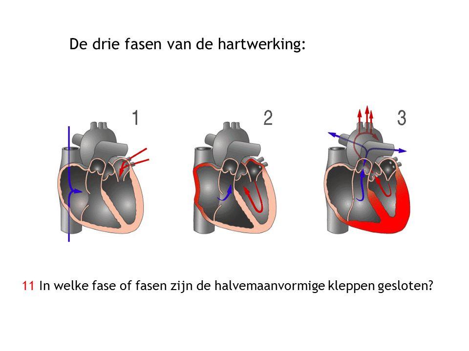 De drie fasen van de hartwerking: 11 In welke fase of fasen zijn de halvemaanvormige kleppen gesloten?