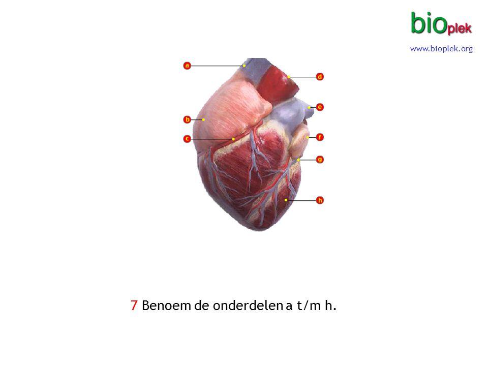 8 Benoem de onderdelen a t/m h. (bij 'b' is het begin van een bloedvat te zien) www.bioplek.org