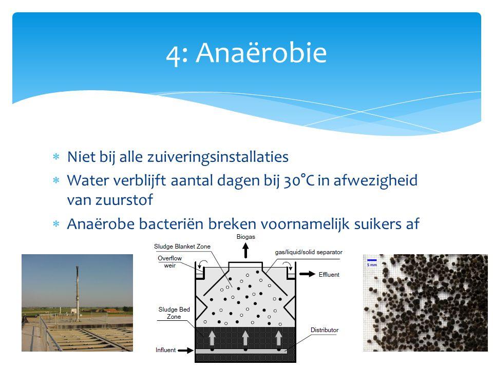  Bekken bevat actief slib (biomassa)  Bacteriën breken resterende schadelijke stoffen (suikers, nitraten…) af  zuurstof nodig.