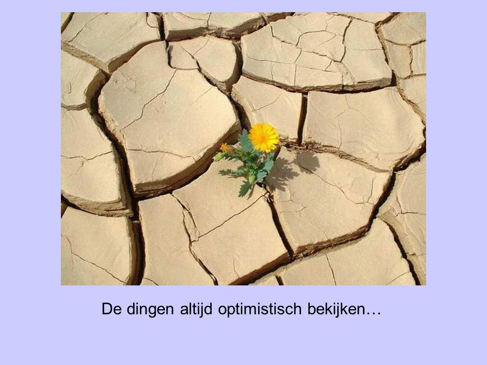 De dingen altijd optimistisch bekijken…