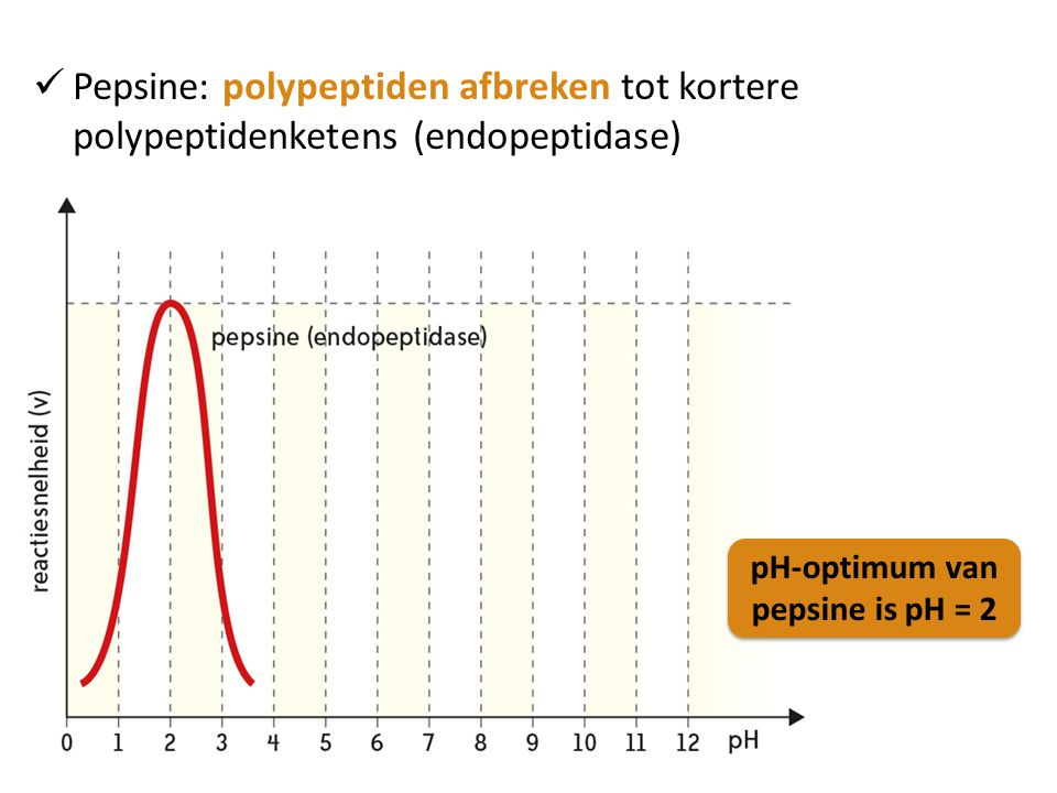 Pepsine: polypeptiden afbreken tot kortere polypeptidenketens (endopeptidase) pH-optimum van pepsine is pH = 2 pH-optimum van pepsine is pH = 2