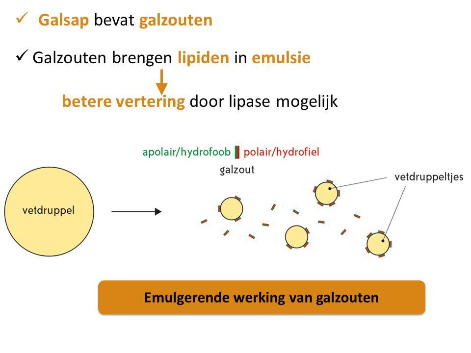 Galsap bevat galzouten Galzouten brengen lipiden in emulsie betere vertering door lipase mogelijk Emulgerende werking van galzouten