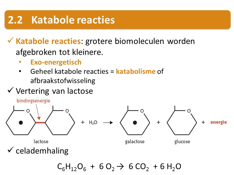 2.2Katabole reacties Katabole reacties: grotere biomoleculen worden afgebroken tot kleinere. Exo-energetisch Geheel katabole reacties = katabolisme of