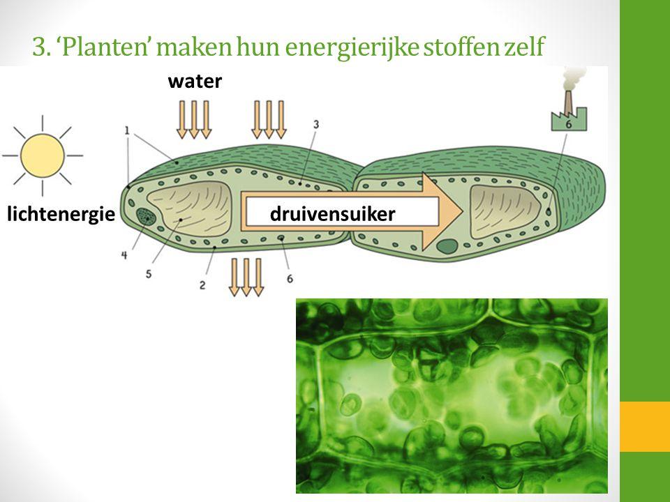 3. 'Planten' maken hun energierijke stoffen zelf lichtenergie water druivensuiker