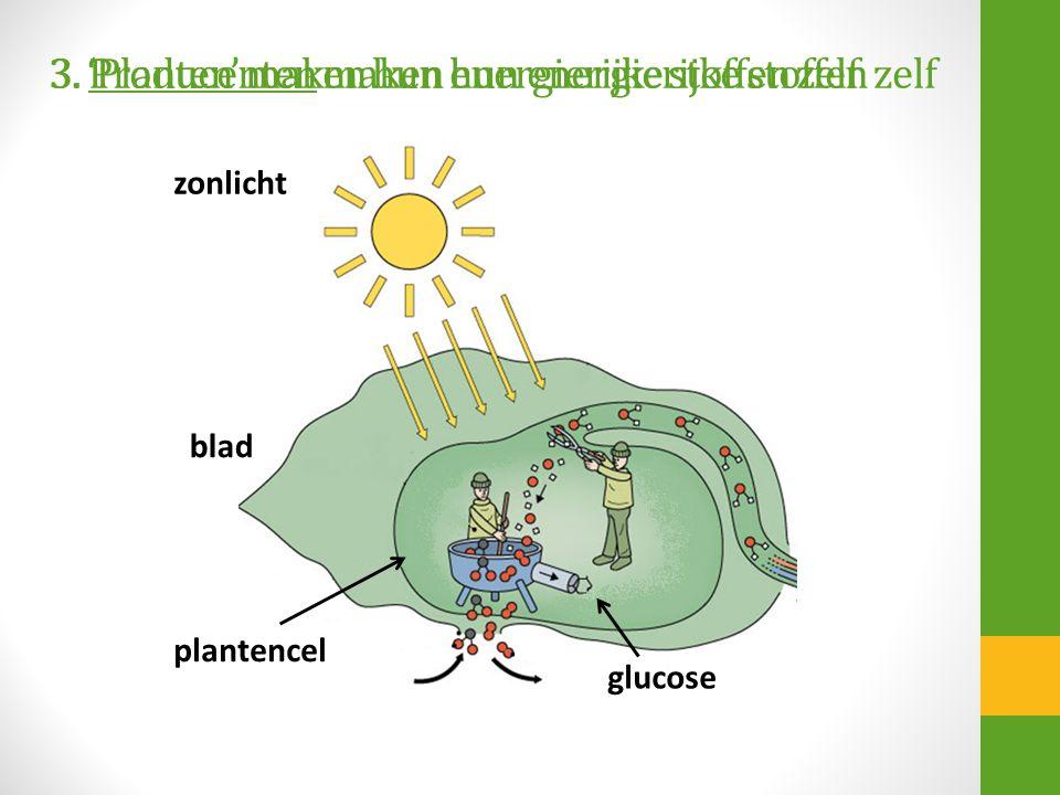 3. Producenten maken hun energierijke stoffen zelf zonlicht blad plantencel glucose 3. 'Planten' maken hun energierijke stoffen zelf