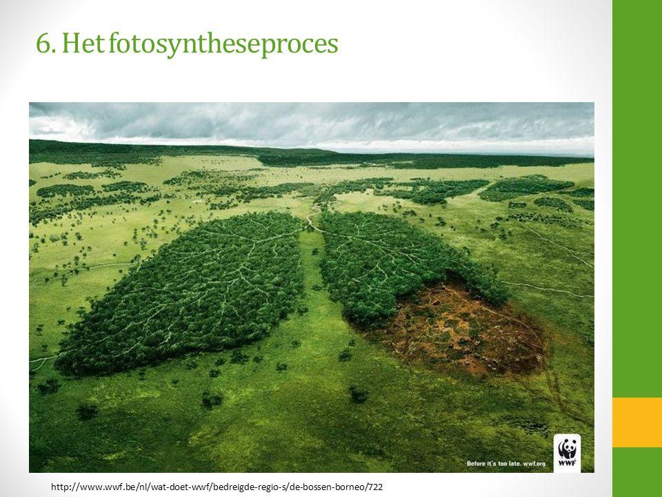 http://www.wwf.be/nl/wat-doet-wwf/bedreigde-regio-s/de-bossen-borneo/722 6. Het fotosyntheseproces
