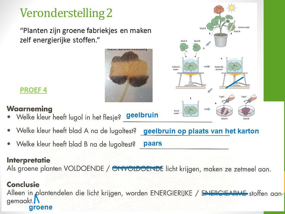 """Veronderstelling 2 """"Planten zijn groene fabriekjes en maken zelf energierijke stoffen."""" PROEF 4 geelbruin geelbruin op plaats van het karton paars gro"""