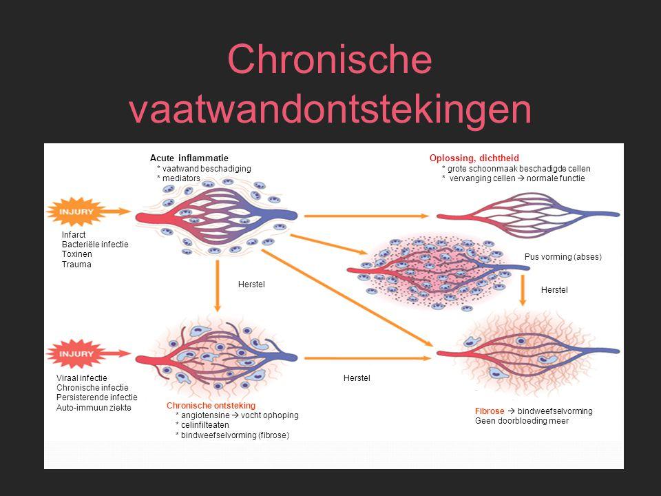 Chronische vaatwandontstekingen Fibrose  bindweefselvorming Geen doorbloeding meer Chronische ontsteking * angiotensine  vocht ophoping * celinfilte