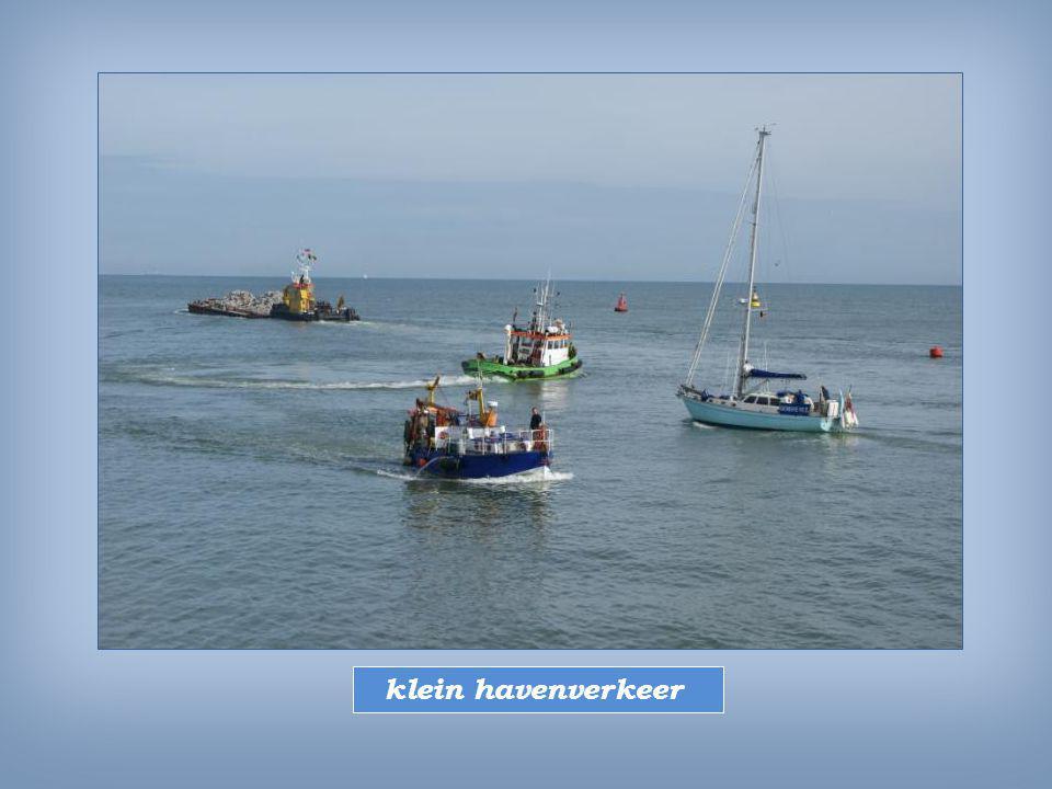 David uit Oostkamp seingevers voor kustvissers ; omdat ze als eersten gewaar worden welke vissoort dichtbij is