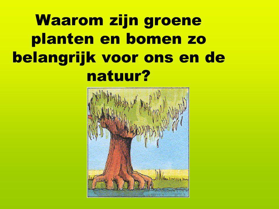 Waarom zijn groene planten en bomen zo belangrijk voor ons en de natuur?