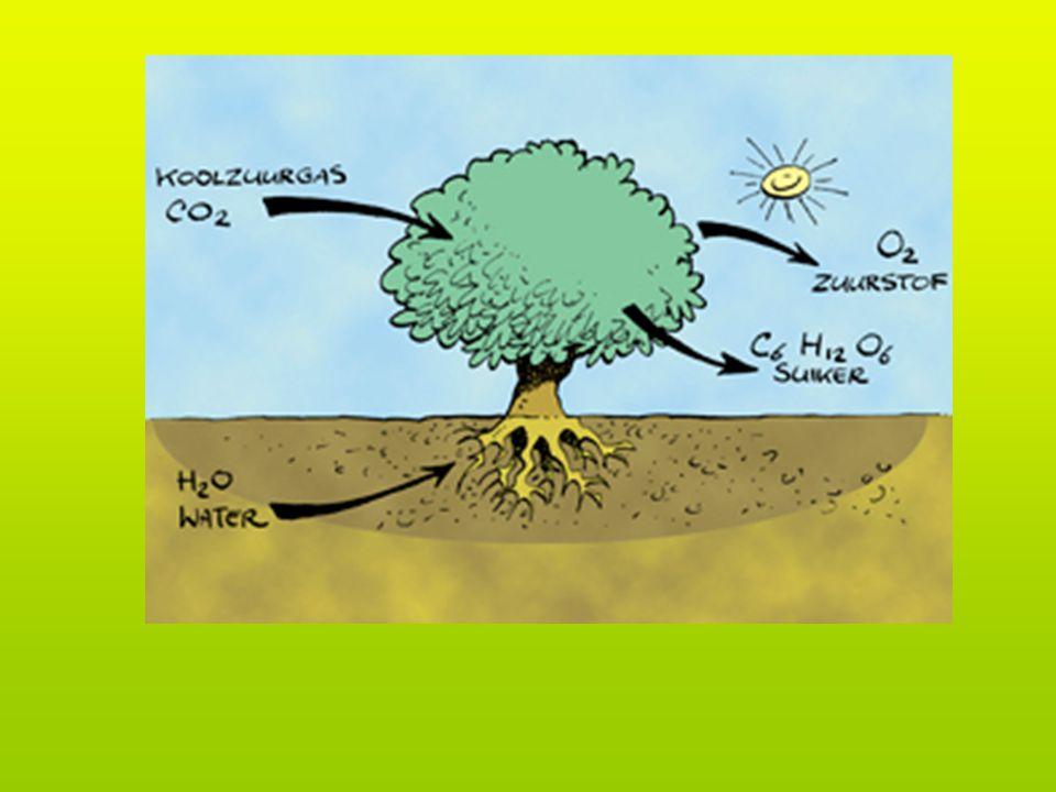 Hoe noemt men het proces waarbij koolzuurgas door het blad omgezet wordt in zuurstof en voedsel.