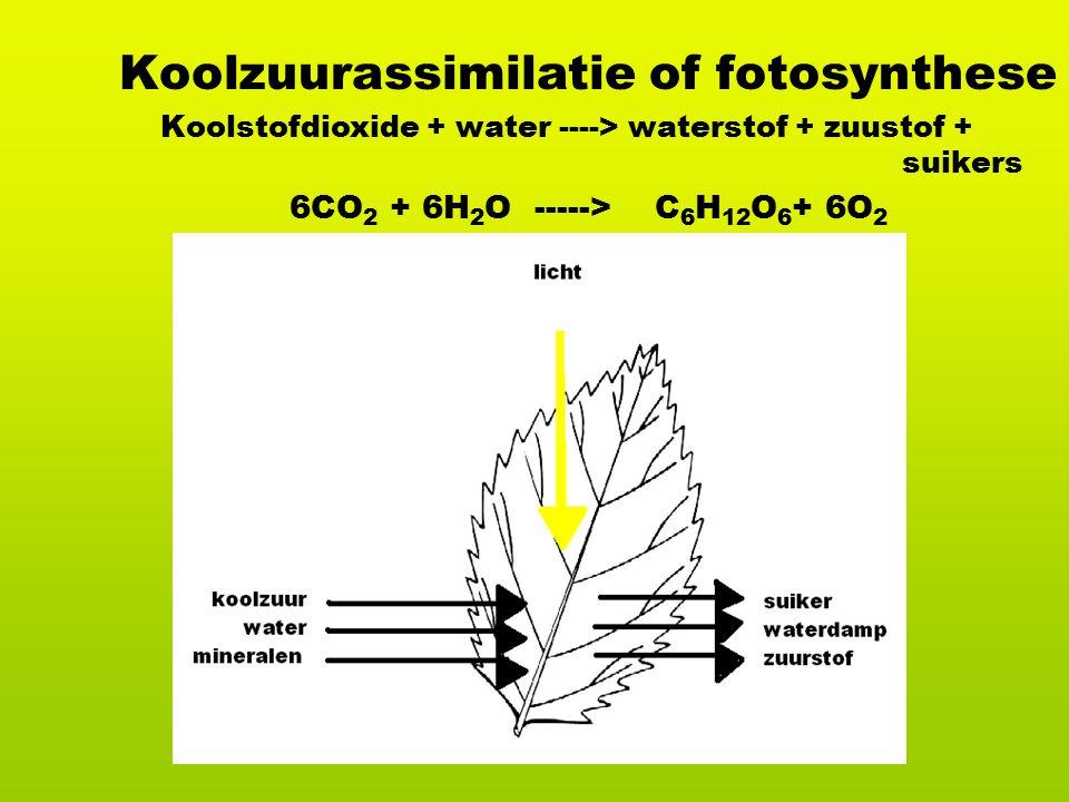 Koolzuurassimilatie of fotosynthese Koolstofdioxide + water ----> waterstof + zuustof + suikers 6CO 2 + 6H 2 O -----> C 6 H 12 O 6 + 6O 2