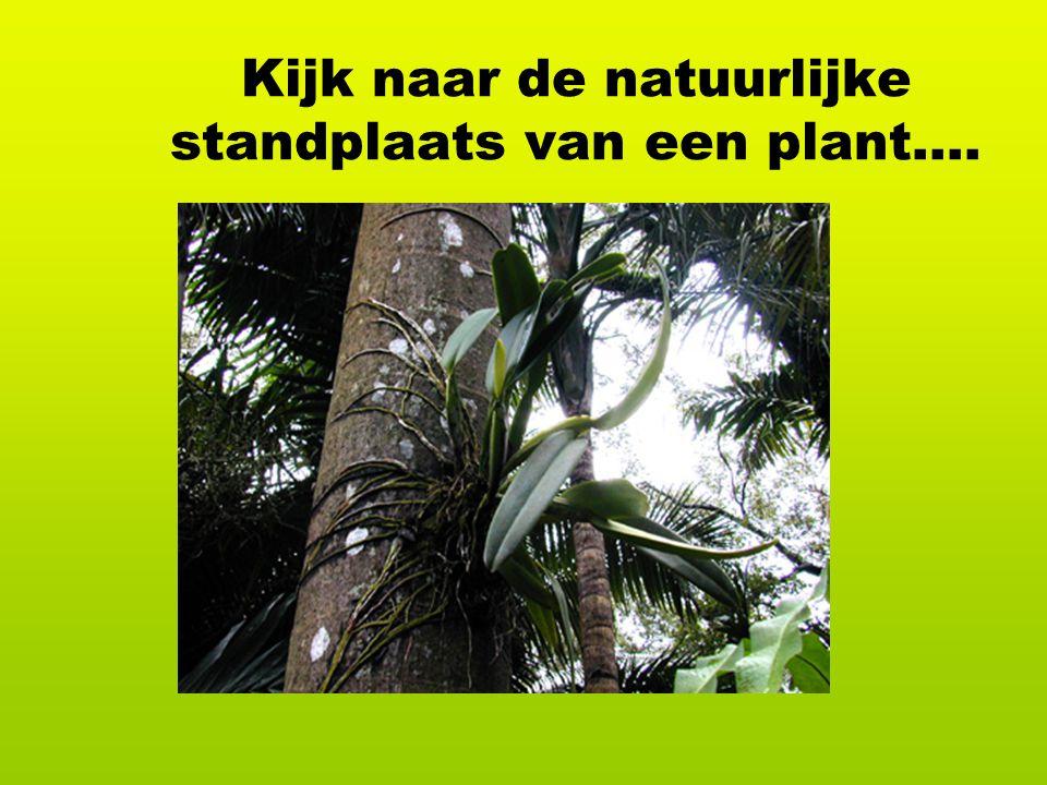 Kijk naar de natuurlijke standplaats van een plant….