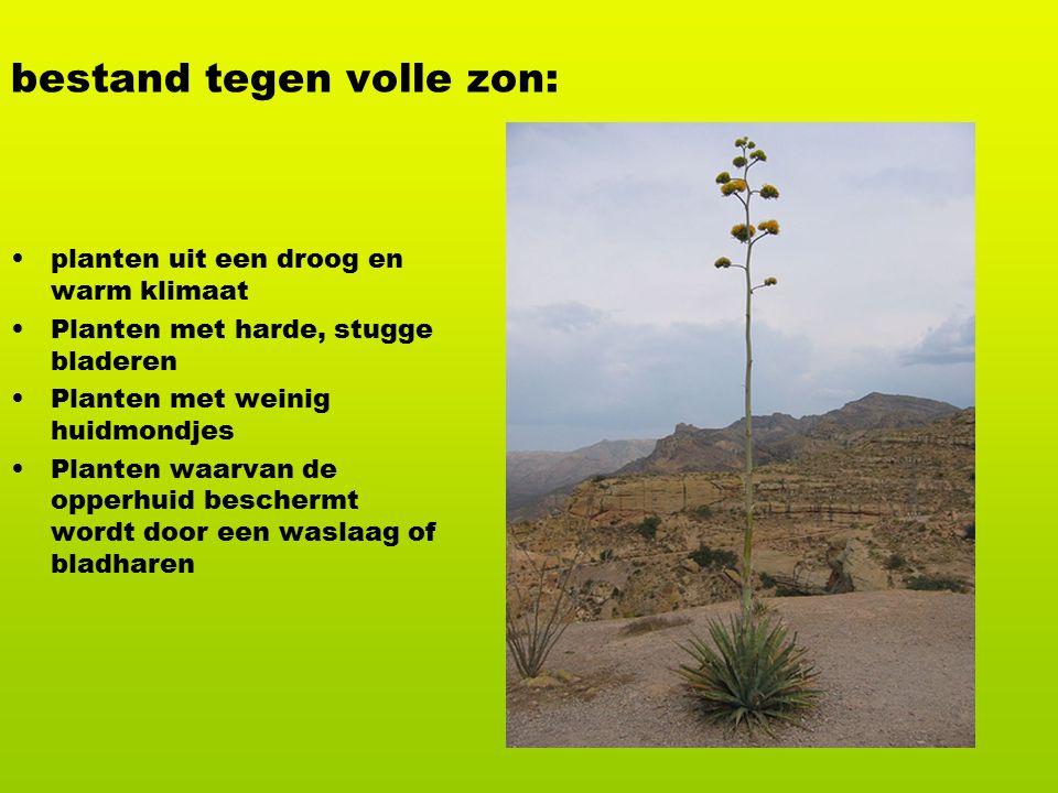 Er bestaan speciale plantenlampen.