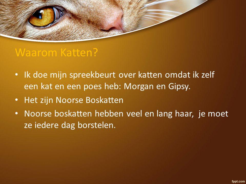 Waarom Katten? Ik doe mijn spreekbeurt over katten omdat ik zelf een kat en een poes heb: Morgan en Gipsy. Het zijn Noorse Boskatten Noorse boskatten