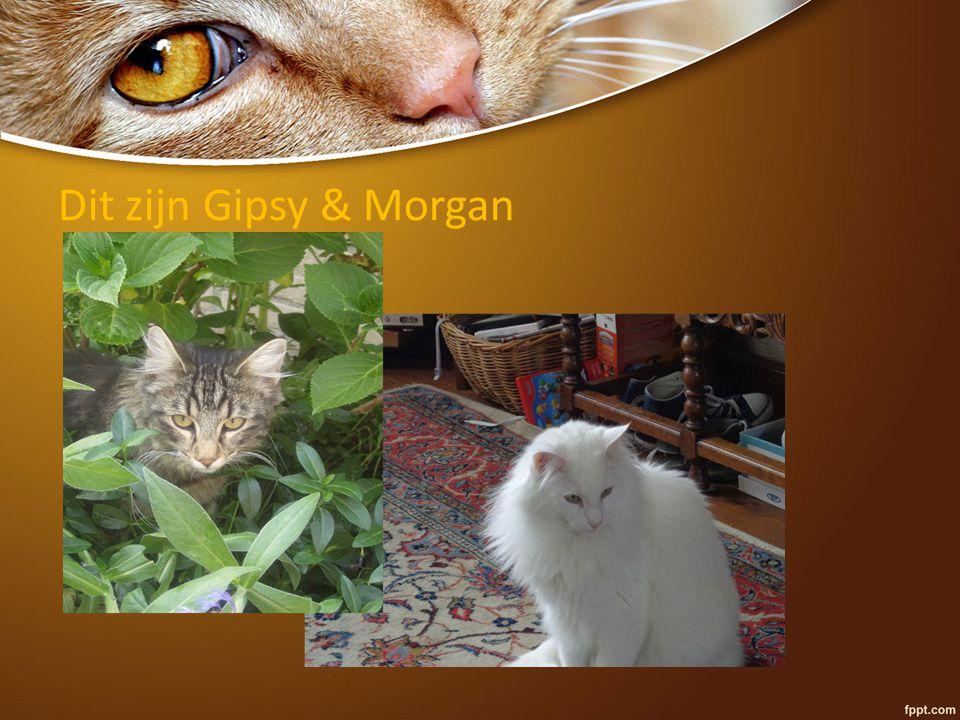 Dit zijn Gipsy & Morgan