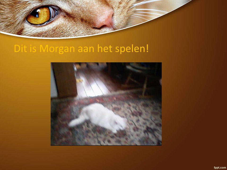 Dit is Morgan aan het spelen!