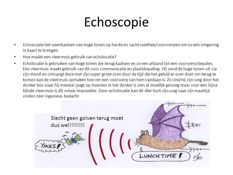 Echoscopie Echoscopie het weerkaatsen van hoge tonen op harde en zacht weefsels/voorwerpen om zo een omgeving in kaart te brengen Hoe maakt een vleerm