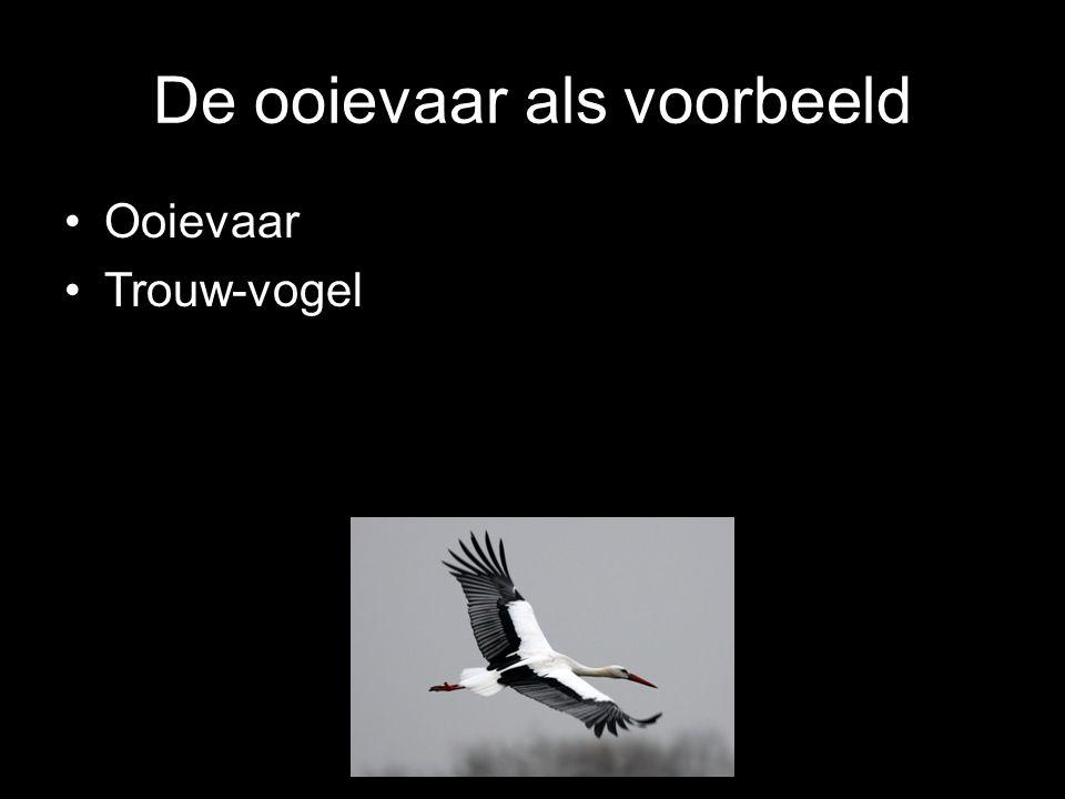 Ooievaar Trouw-vogel