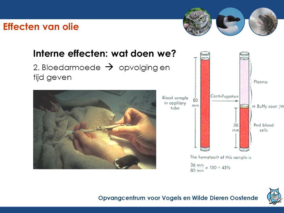 Interne effecten: wat doen we? 2. Bloedarmoede  opvolging en tijd geven Effecten van olie Opvangcentrum voor Vogels en Wilde Dieren Oostende