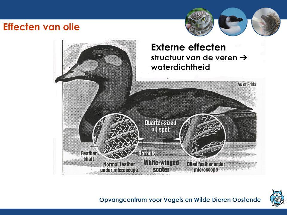 Externe effecten structuur van de veren  waterdichtheid Effecten van olie Opvangcentrum voor Vogels en Wilde Dieren Oostende
