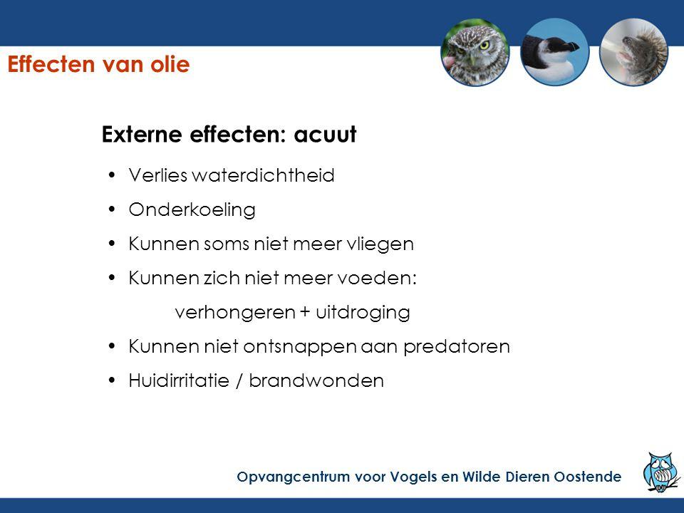 Externe effecten: acuut Resultaat: 1.verdrinken Y.