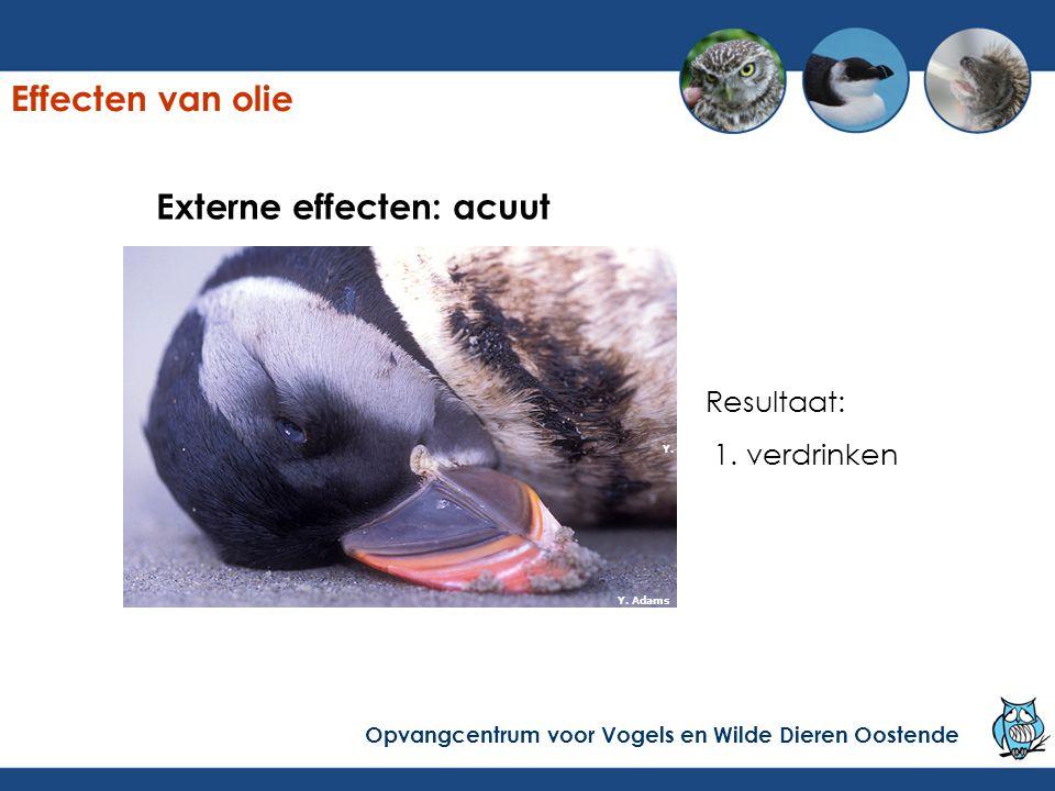 Externe effecten: acuut Resultaat: 1. verdrinken Y. Adams Effecten van olie Opvangcentrum voor Vogels en Wilde Dieren Oostende