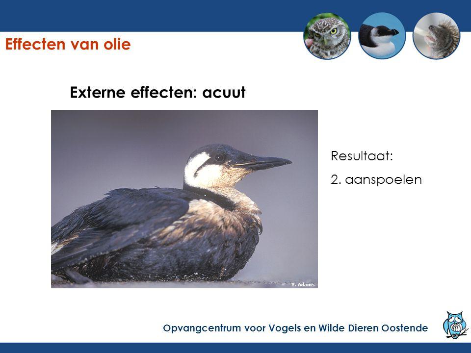 Externe effecten: acuut Resultaat: 2. aanspoelen Y. Adams Effecten van olie Opvangcentrum voor Vogels en Wilde Dieren Oostende
