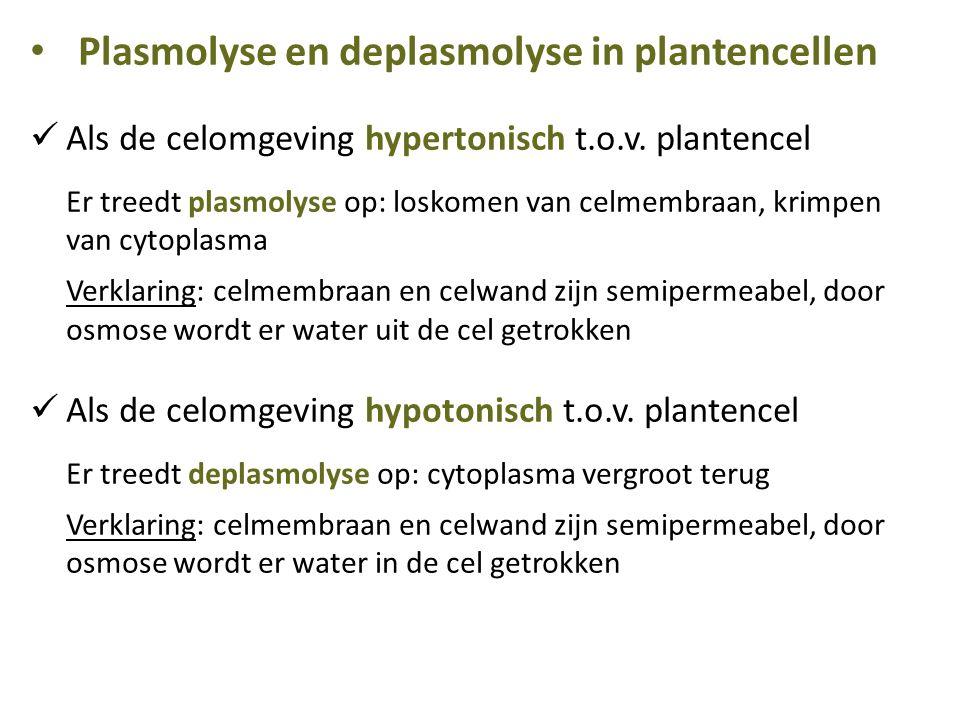 Plasmolyse en deplasmolyse in plantencellen Als de celomgeving hypertonisch t.o.v. plantencel Er treedt plasmolyse op: loskomen van celmembraan, krimp