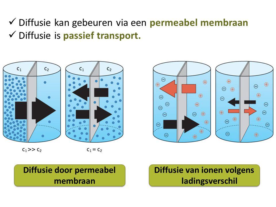 Diffusie kan gebeuren via een permeabel membraan Diffusie is passief transport. Diffusie door permeabel membraan Diffusie van ionen volgens ladingsver