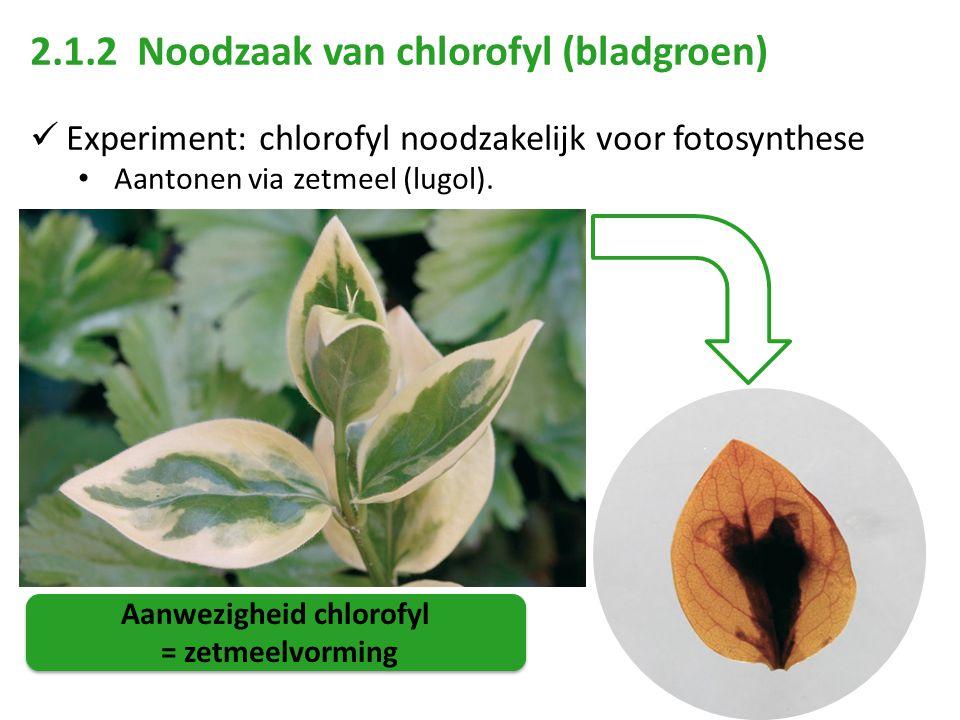 2.1.2 Noodzaak van chlorofyl (bladgroen) Experiment: chlorofyl noodzakelijk voor fotosynthese Aantonen via zetmeel (lugol). Aanwezigheid chlorofyl = z