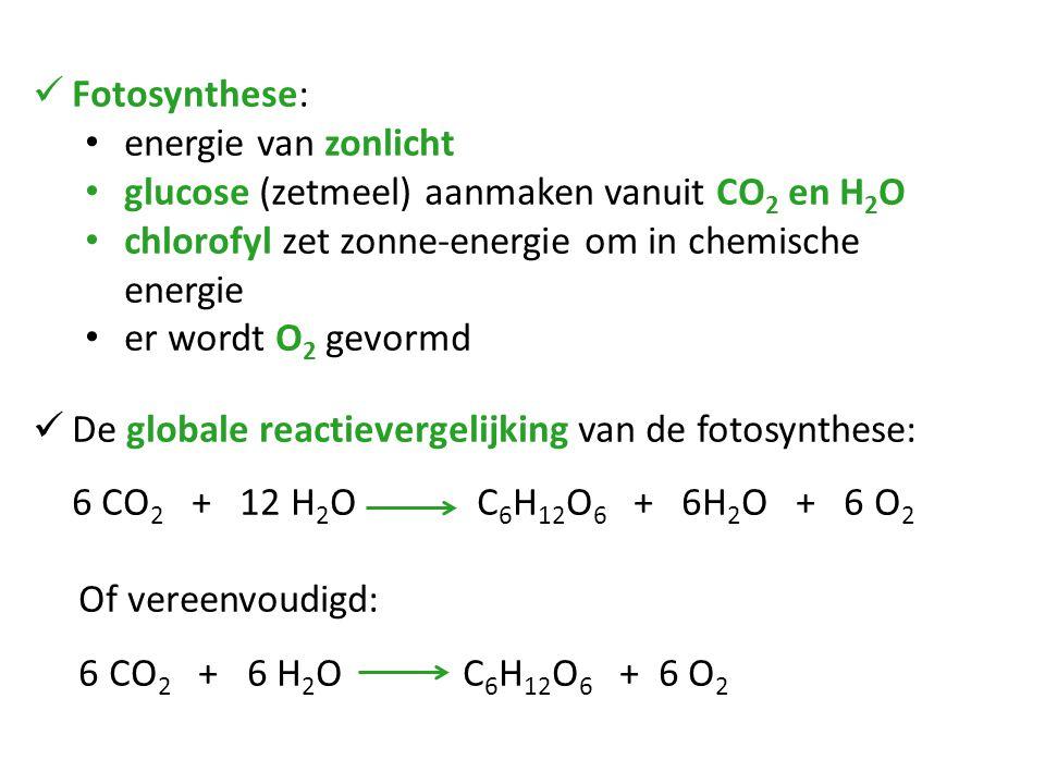 Fotosynthese: energie van zonlicht glucose (zetmeel) aanmaken vanuit CO 2 en H 2 O chlorofyl zet zonne-energie om in chemische energie er wordt O 2 ge