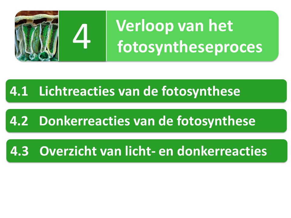 Verloop van het fotosyntheseproces Verloop van het fotosyntheseproces 4 4 4.1Lichtreacties van de fotosynthese 4.2Donkerreacties van de fotosynthese 4