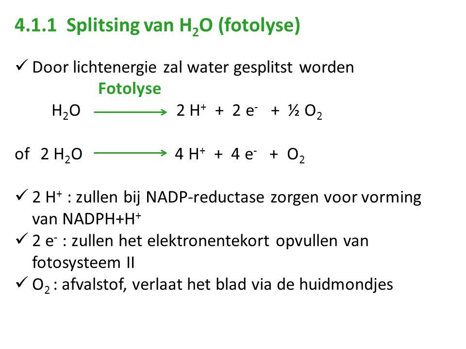 4.1.1 Splitsing van H 2 O (fotolyse) Door lichtenergie zal water gesplitst worden Fotolyse H 2 O 2 H + + 2 e - + ½ O 2 of 2 H 2 O 4 H + + 4 e - + O 2