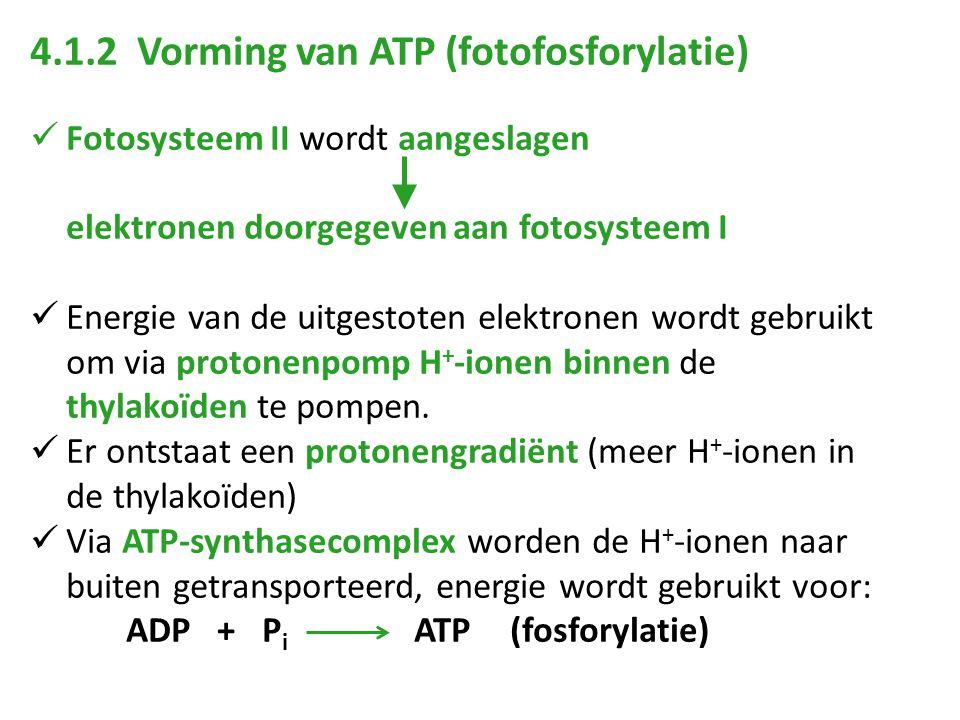 4.1.2 Vorming van ATP (fotofosforylatie) Fotosysteem II wordt aangeslagen elektronen doorgegeven aan fotosysteem I Energie van de uitgestoten elektron