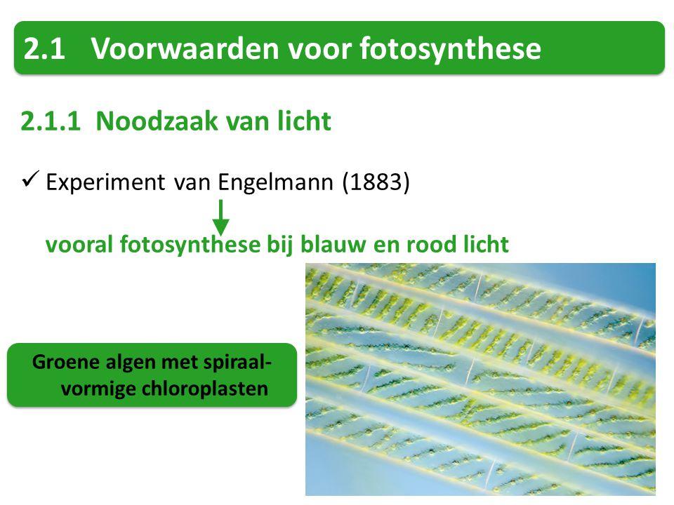 2.1Voorwaarden voor fotosynthese 2.1.1 Noodzaak van licht Experiment van Engelmann (1883) vooral fotosynthese bij blauw en rood licht Groene algen met