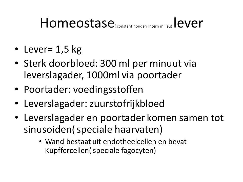 Homeostase ( constant houden intern milieu) lever Lever= 1,5 kg Sterk doorbloed: 300 ml per minuut via leverslagader, 1000ml via poortader Poortader:
