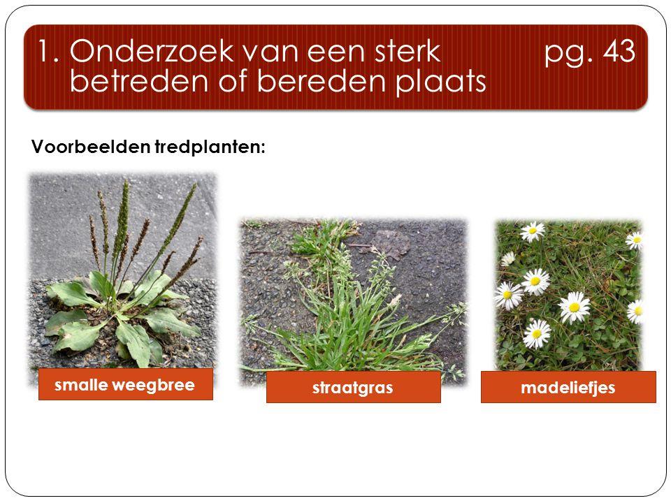 Voorbeelden tredplanten: 1. Onderzoek van een sterk pg. 43 betreden of bereden plaats 1. Onderzoek van een sterk pg. 43 betreden of bereden plaats sma
