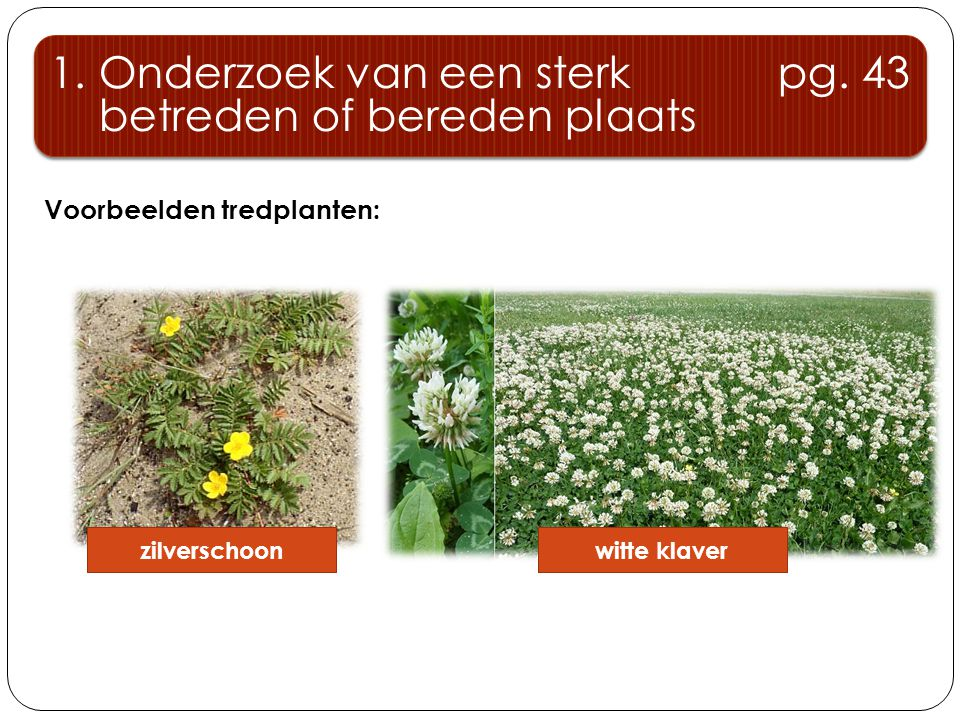 Voorbeelden tredplanten: 1. Onderzoek van een sterk pg. 43 betreden of bereden plaats 1. Onderzoek van een sterk pg. 43 betreden of bereden plaats zil