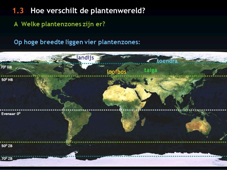 Hoe verschilt de plantenwereld? A Welke plantenzones zijn er? Evenaar 0 0 30 0 ZB 30 0 NB Op lage breedte liggen vier plantenzones: tropisch regenwoud
