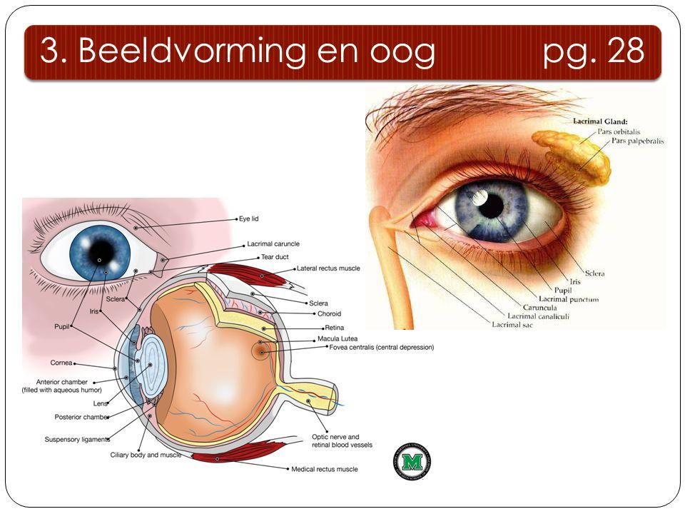 3.1.1 beschermende delen 3.Beeldvorming en oog pg.