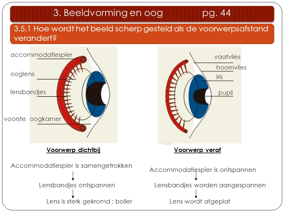 voorste oogkamer lensbandjes ooglens accommodatiespier hoornvlies iris pupil Accommodatiespier is samengetrokken Lensbandjes ontspannen Lens is sterk
