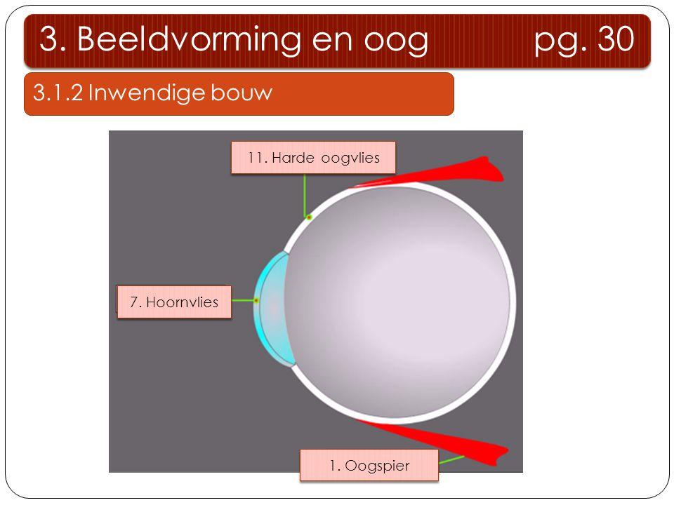 3.1.2 Inwendige bouw 3.Beeldvorming en oog pg. 30 11.