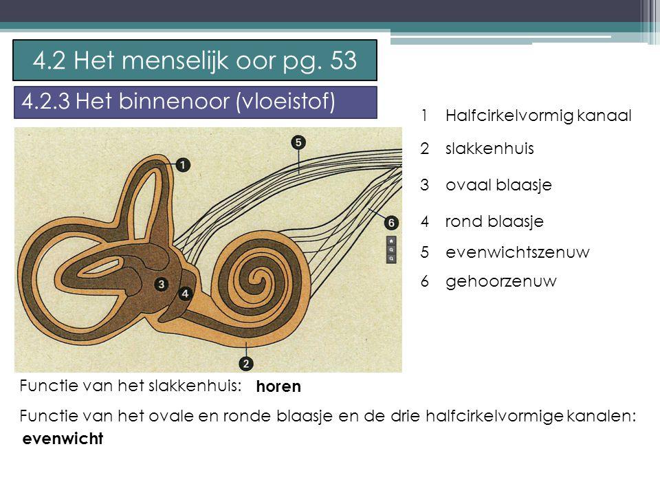 P. Feys - Sint – Jorisschool Menen 1 2 3 4 5 Halfcirkelvormig kanaal slakkenhuis ovaal blaasje rond blaasje evenwichtszenuw 4.2 Het menselijk oor pg.