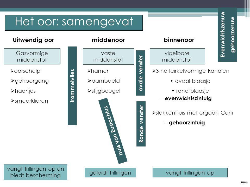 P. Feys - Sint – Jorisschool Menen Uitwendig oormiddenoorbinnenoor   oorschelp   gehoorgang   haartjes   smeerklieren   hamer   aambeeld 